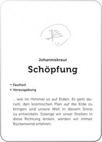 Das Johanniskraut - Lichtkraut