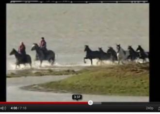 Rücklicht: Die Rettung der Pferde