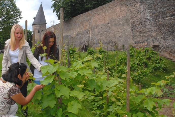 Gärten für alle in Andernach