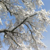 Jahreszeitenfest: Das Lichtfest - Imbolc