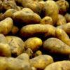 Die Kartoffelbewegung in Griechenland