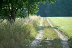 Sommerweg