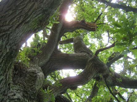 Zum Abschluss Bäume pflanzen