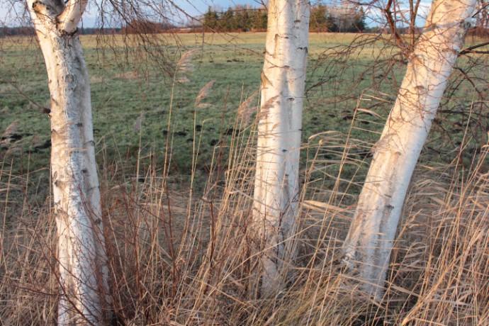 Lichtübung: Herbstmeditation