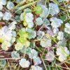 Heilende Gärten im November