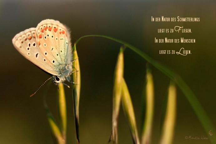 Lichtbild: Schmetterling