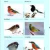 Mitmachen: Stunde der Wintervögel