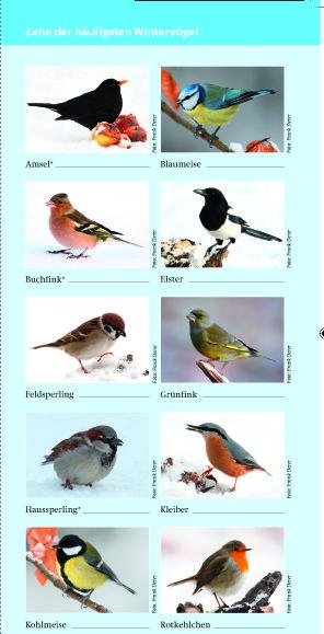 wintervögel Kopie