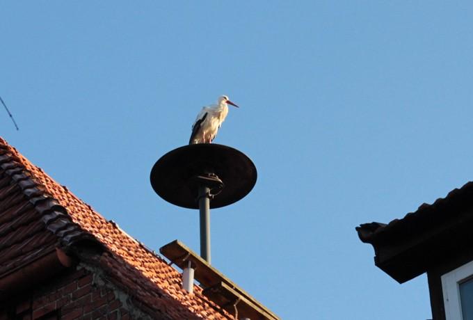 Lichtbild: Storch trotzt der Kälte