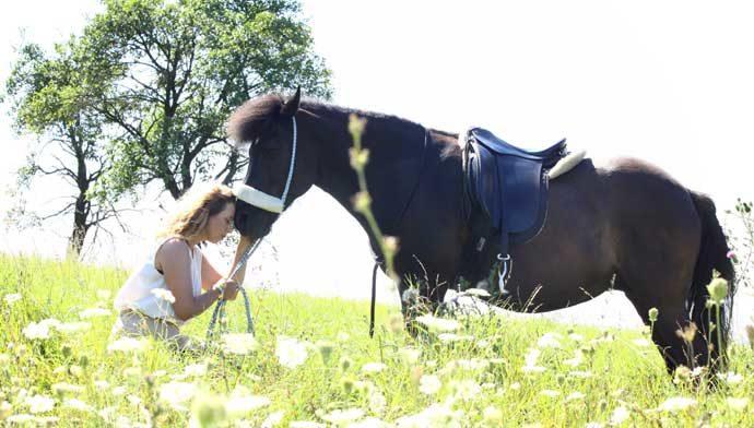 Die Botschaft der Pferde an uns Menschen | newslichter - Gute ...