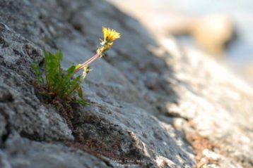 Abschied vom Wachstumszwang