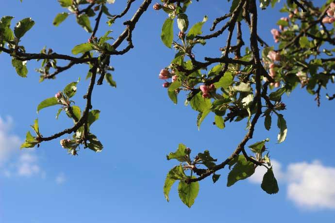 Sternennews: Frühlingspowerwoche