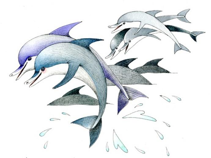 3-delfine-jpeg