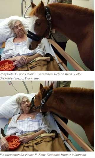 Tiere in der Sterbebegleitung
