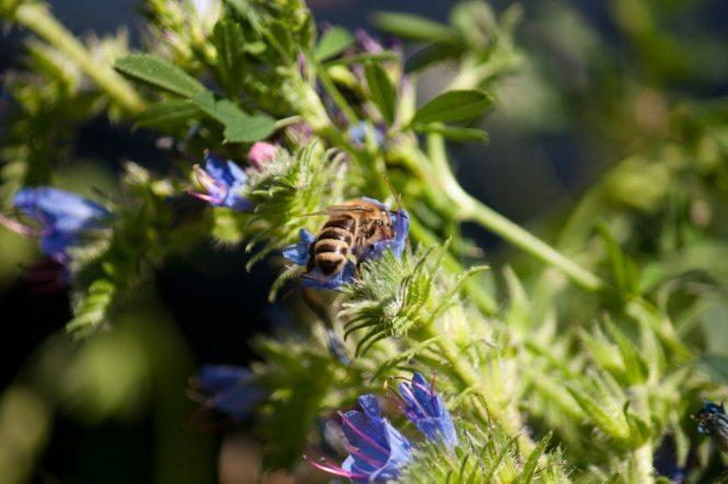Rettet die Bienen: Ein Erfahrungsbericht