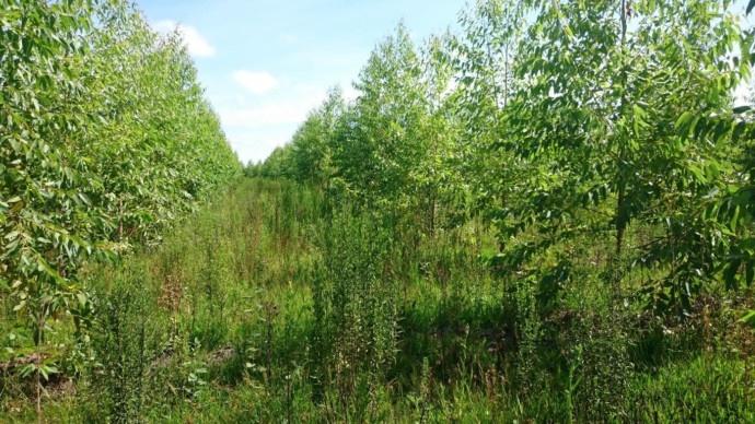 Der Herzenswald von 1tree4one