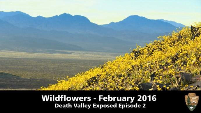 Super Bloom in der Wüste  newslichter  Gute Nachrichten