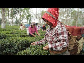 Überleben sichern mit nachhaltiger Landwirtschaft