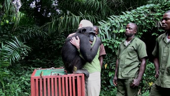 Freiheit für die Schimpansen