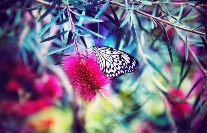 Von der Raupe Nimmersatt zum Schmetterling