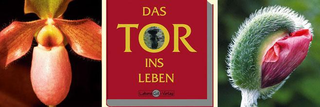 """Die Entstehung des Buches """"Das Tor ins Leben"""""""