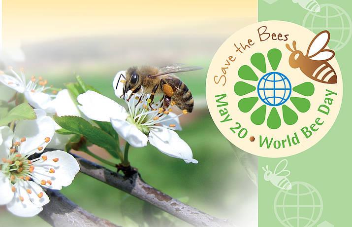 Der erste Weltbienentag!