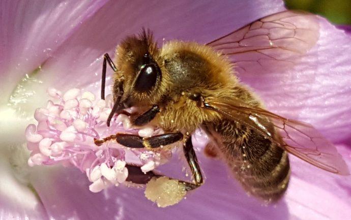 Lichtbild: Bienenzauber