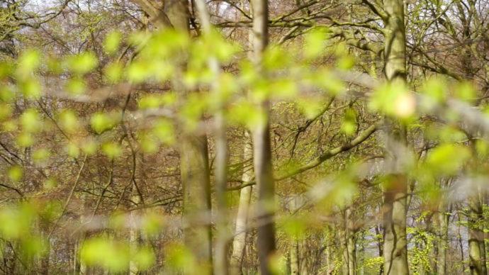 Waldbaden und Waldtherapie