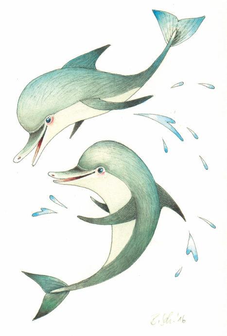 Schwimmen mit freien Delfinen