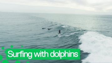 Surfen mit Delphinen