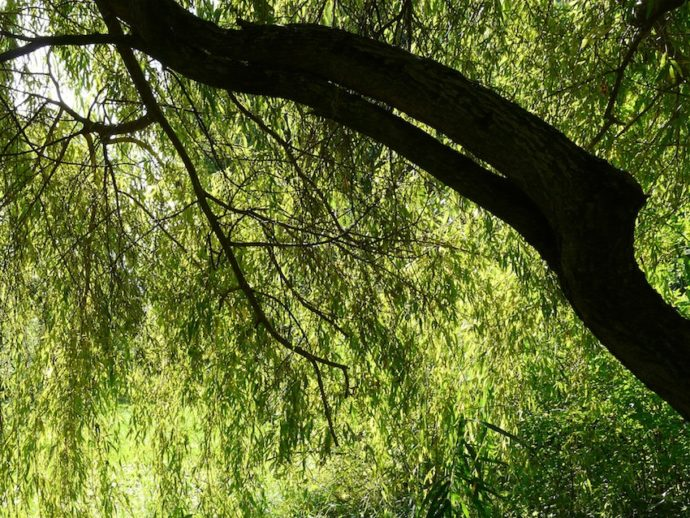 Medizin für unsere Seele: Weide und Buntspecht