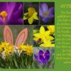 Lichtbild: Osterkarte