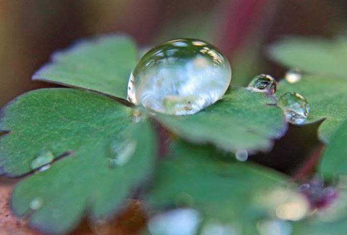 Der magische Vergrößerungsglas-Effekt