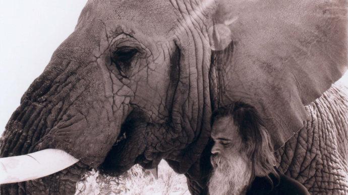 Der Elefantenmann Chris Galluci