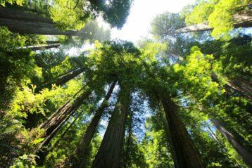 Bäume sind Heiligtümer