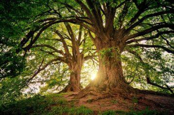 Die Freude der Wiesen und Wälder