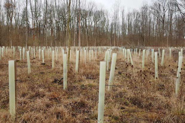Der Wald als Ökosystem und nicht als Holzfabrik