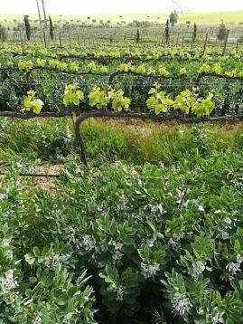 3 Beispiele für klimasichere Land- und Forstwirtschaft