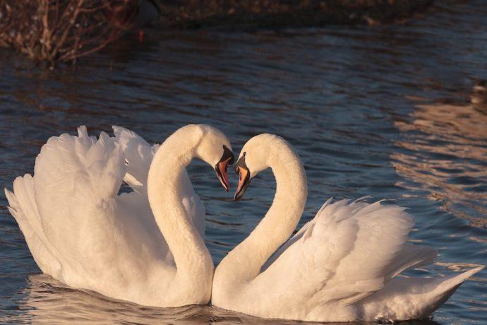 Wir müssen einander lieben oder wir müssen sterben