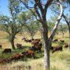 Permakultur und Biodiversität in Australien
