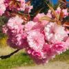 Verbinde Dich Tag 65: Die Spur der Blüten