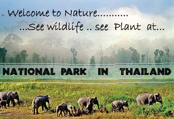 Atempause für die Natur